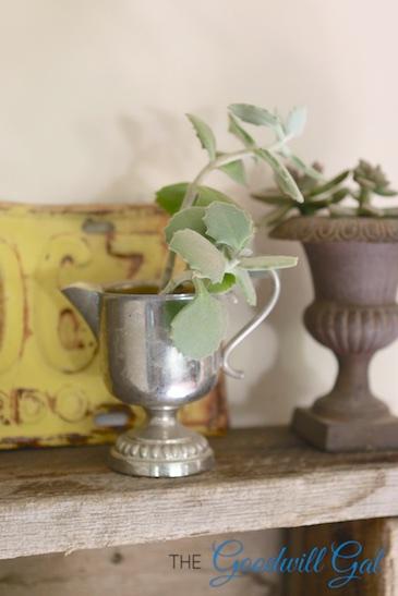 silversucculent (1)