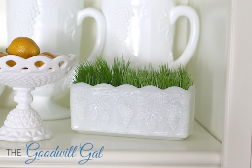 milkglassgrass