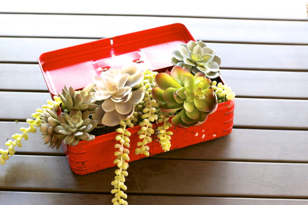 Repurposed Toolbox into a cute Succulent Planter